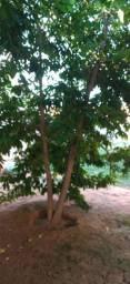 Vende-se um terreno cidade de Abaetetuba Pará