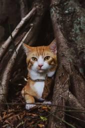 Ensaio Fotográfico Pet (Cães e gatos) -RJ- Seu amigo fiel merece lindas lembranças