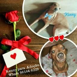 Kenny - Adoção Responsável