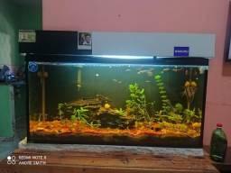 Título do anúncio: Vendo aquário plantado