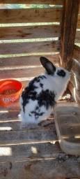 Coelha fêmea