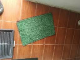 Banheiro ecológico para cachorro usado