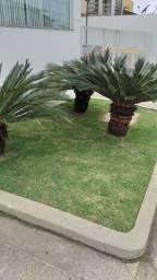 Aparo de grama/manutenção de grama/plantio