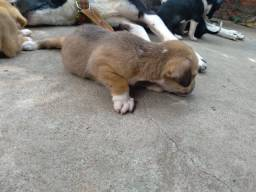 Adoção de filhotes (cachorro)