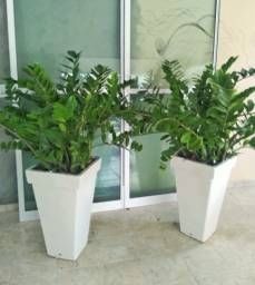 Planta Ornamental Com Vaso ( 2 unidades )