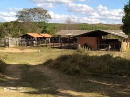 Fazenda 368 hectares