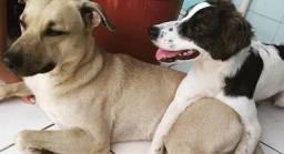 Doação de cachorro em Arembepe