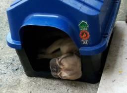 Casinha de cachorro média