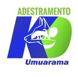 Adestramento de cães K9UMUARAMA