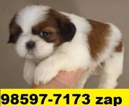 Canil Filhotes Cães Top BH Shihtzu Maltês Poodle Beagle Lhasa Bulldog Yorkshire