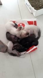 Doação de 6 gatos filhotes