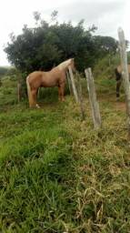 Vende-se ou troca cavalo Mestiço de quarto de Mila Boquim-Se