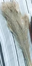 Pena de pavão branco