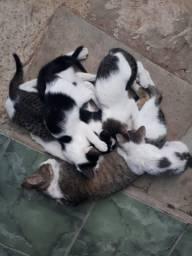 Gatos adoção