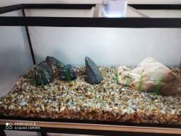 Cascalho de rio e rochas
