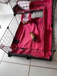 Casa para roedores porquinho da india e coelho
