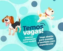 Banhista e tosador para pet shop