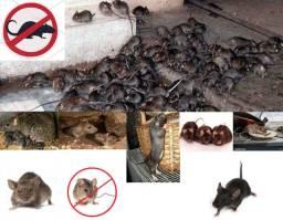 Dedetização Extermina Ratos, Baratas e Pragas de todos os tipos *