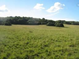 Velleda oferece fazenda 236 hectares santana do livramento