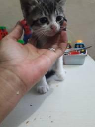 Gato macho com 2 meses para doação