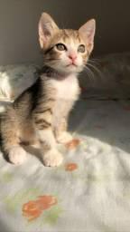 Doação de gatinho lindo!!