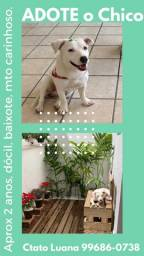 Adoção cachorro doa-se adote doase