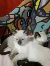 Filhotes de gatos.