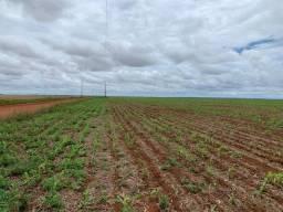 Fazenda 700 Hectares - Plantando Lavoura - MT