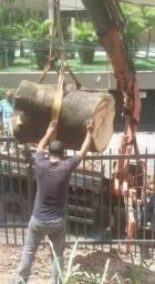 Título do anúncio: Poda e corte de árvores orçamento sem compromisso
