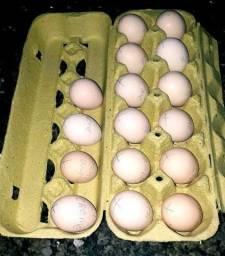 Ovos Galados Sedosas do Japão Silkie