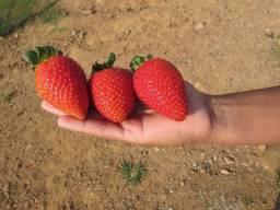Título do anúncio: morango kilo R$ 20.00