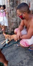 Doa-se linda cachorrinha porte médio