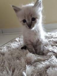 Filhotes gatinho