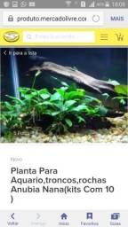 Compro aquario plantado