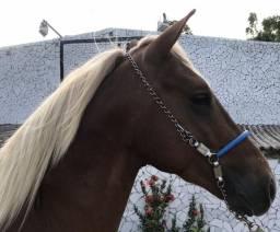 Cavalos a venda no haras Feijó , aluguel de baias e cursos diversos