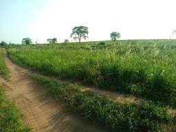 Arrendo área agricola