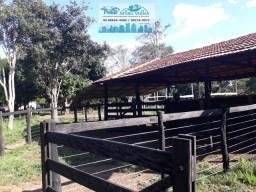 Chácara 26.8 hectares na Beira da BR 364
