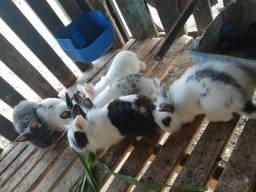 Vende-se 6 mini coelhos
