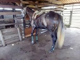Cavalo pronto de esteira