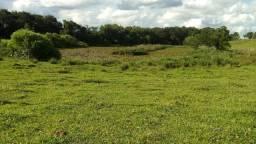 Toda em pasto em Guaraniaçu  com mangueira  tronco  Boa de agua podendo mecanizar 2  alq