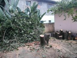 Corte, Extração e podas de Árvores