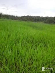 Fazenda para integração lavoura pecuária na região de Santa Maria do Tocantins - TO