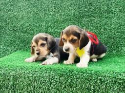 Beagles babys mini
