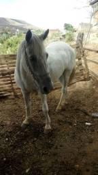 Cavalo com muita passada vendo pu troco.