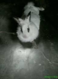 Vende-se coelho
