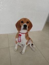 Beagle (Catalão-GO)