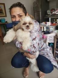 Atendimento veterinário a domicílio