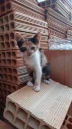 Doação: Lindos gatos .