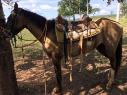 Égua muito mansa 1.250