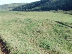 Fazenda de 100 alq. Em Guaraniaçu